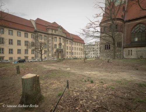 Baumfällungen am Roedeliusplatz